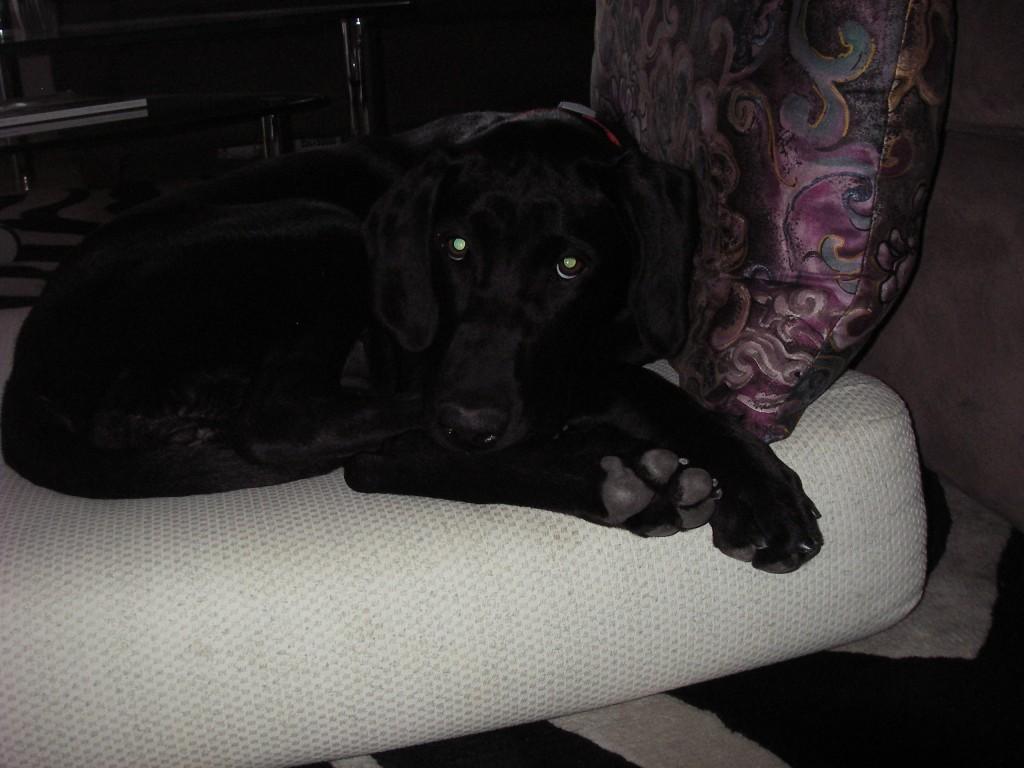 Foster Puppy Mercedes