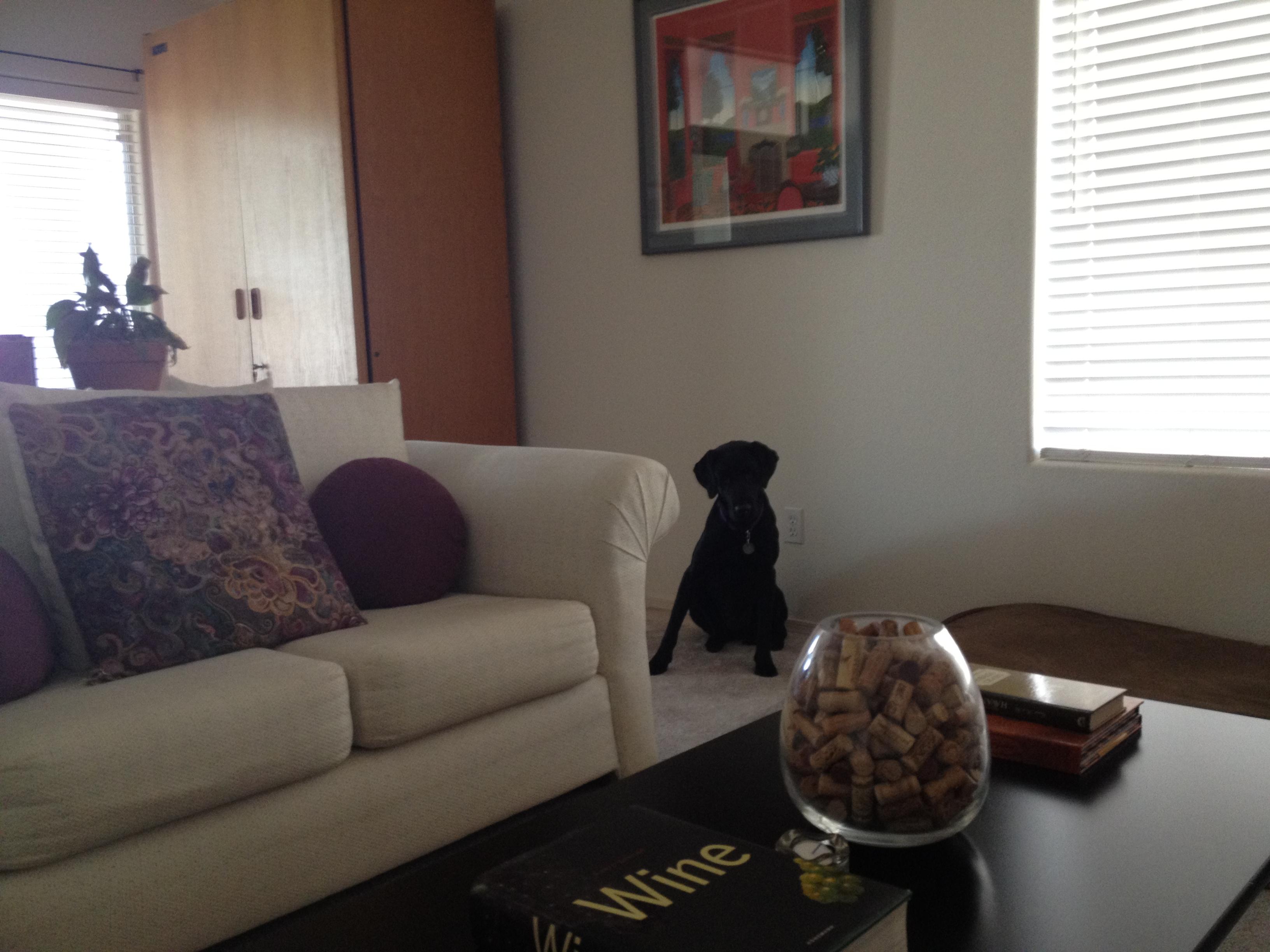Foster Dog Adele