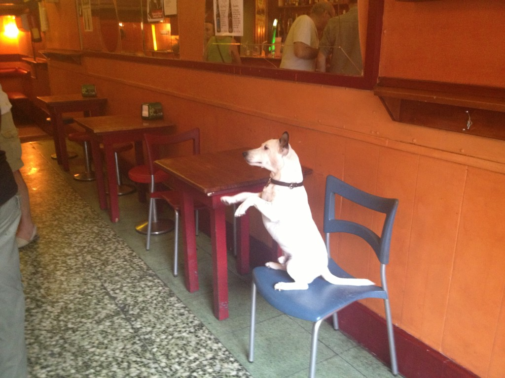 Barcelona dog