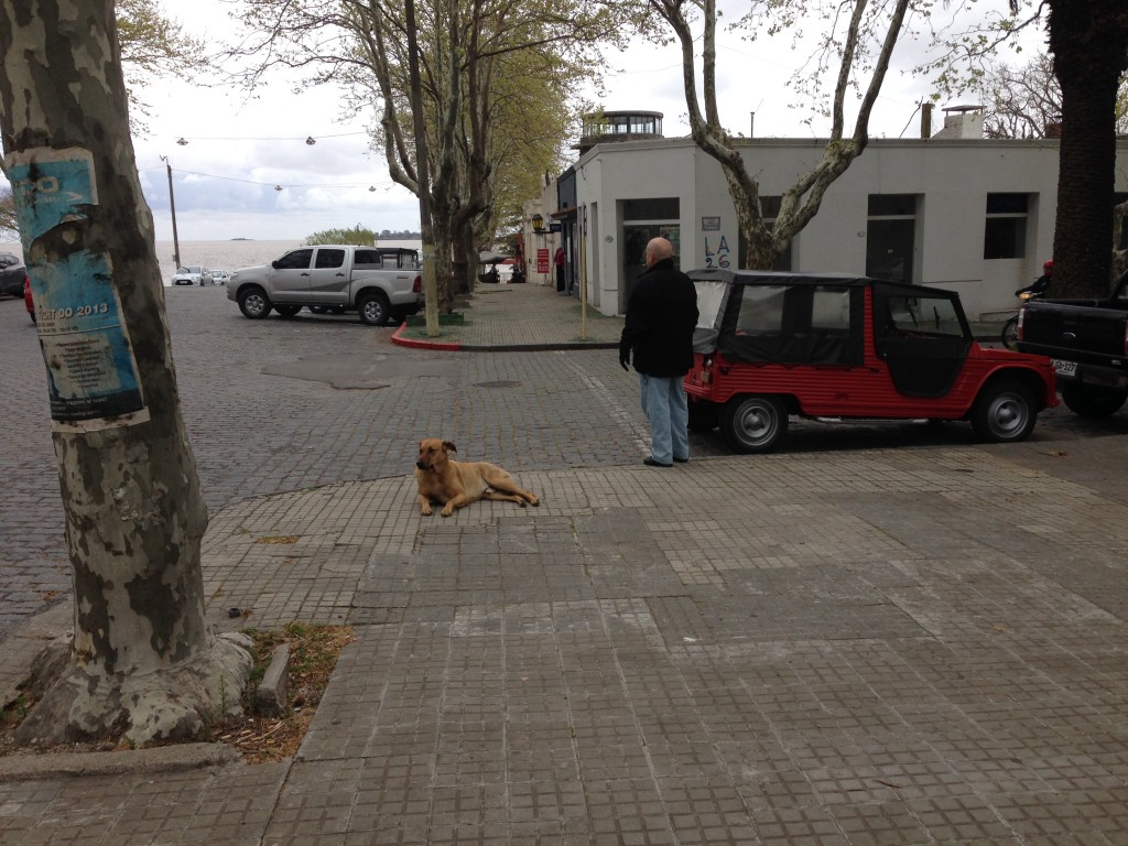 Costa Colonia Uruguay street dog