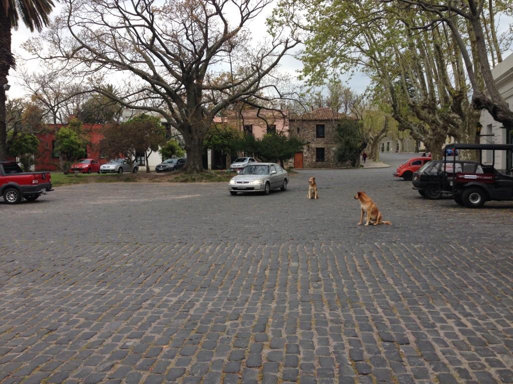 Costa Colonia Uruguay street dogs
