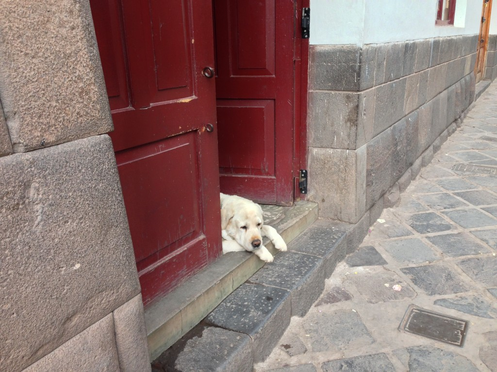 Cusco Peru dog