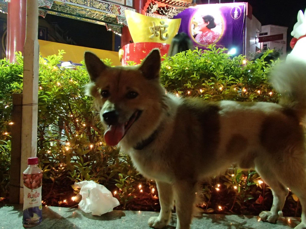 Bangkok Thailand dog