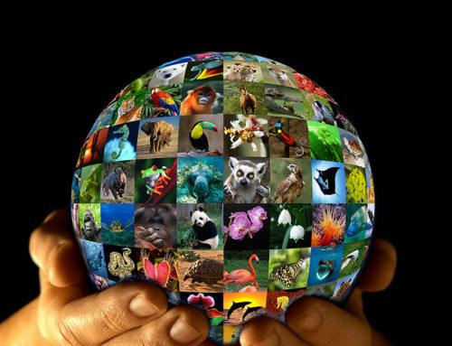 World Wildlife Day: March 3, 2016
