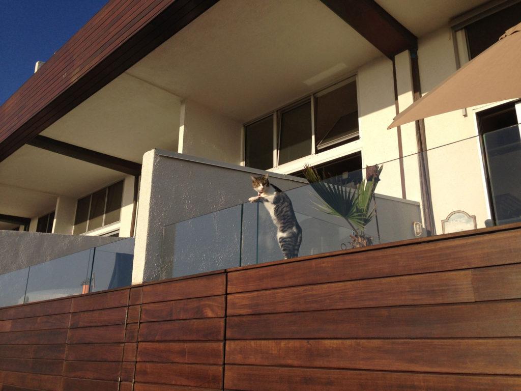 cool cat in Venice Beach