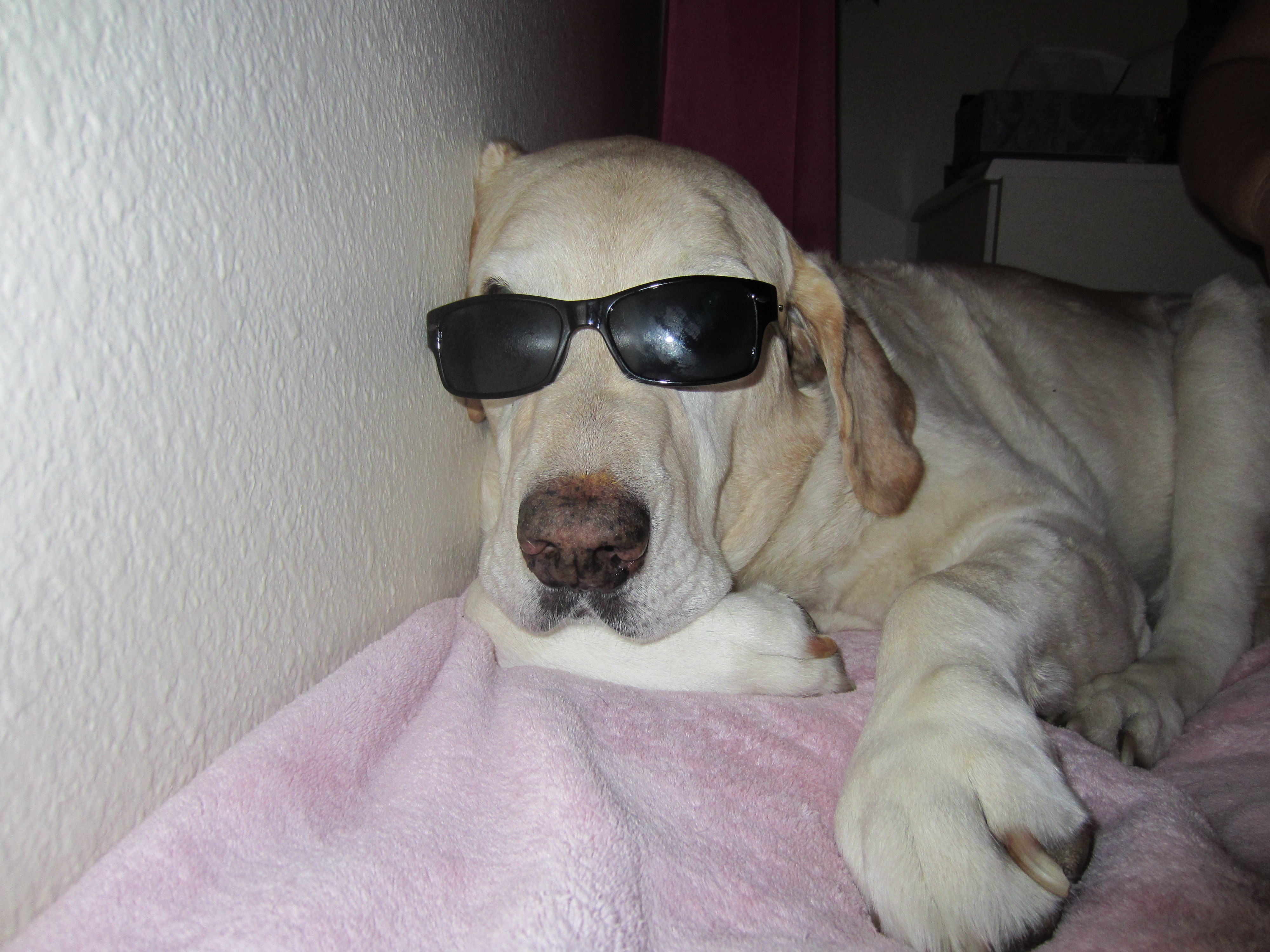 Boomer with shades