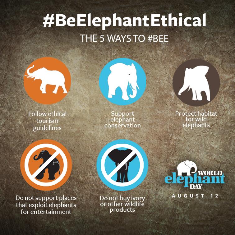 world elephant day 2017
