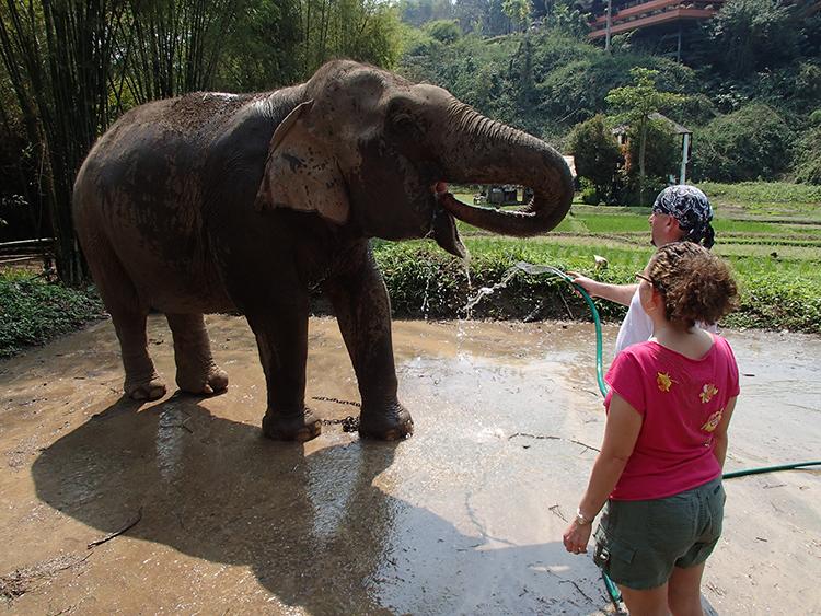elephant drinking Anantara