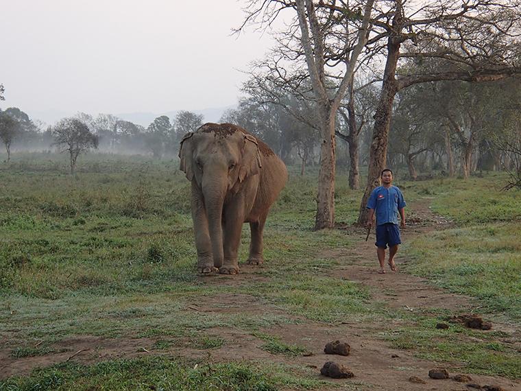 elephant and mahout at Anantara Elephant Camp